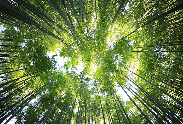 an image of a forest canopy used to depict sustainable timber marking using synthetic dna tracers - Forecast Technology