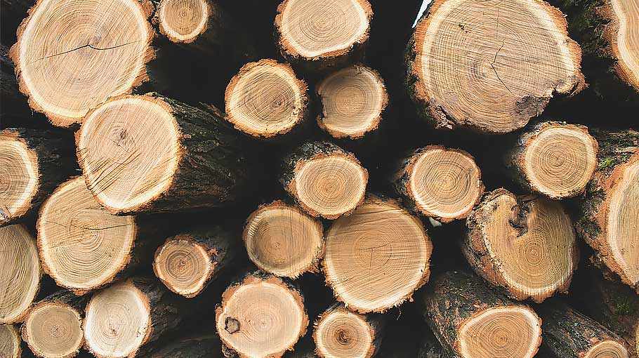 An image of logs stacked representing Illegal timber still filtering into the UK